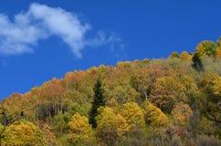 Colores del otoño en los bosques mezclados del parque natural de Posets-Maladeta, español los Pirineos Imagen de archivo