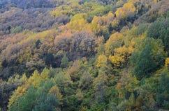 Colores del otoño en los bosques mezclados del parque natural de Posets-Maladeta, español los Pirineos Fotos de archivo libres de regalías