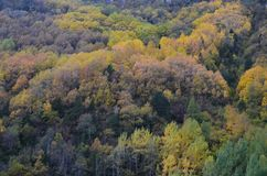 Colores del otoño en los bosques mezclados del parque natural de Posets-Maladeta, español los Pirineos Imágenes de archivo libres de regalías