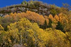Colores del otoño en los bosques mezclados del parque natural de Posets-Maladeta, español los Pirineos Fotografía de archivo libre de regalías