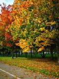 Colores del otoño, hojas del rojo del verde amarillo Caída, día soleado Foto de archivo libre de regalías