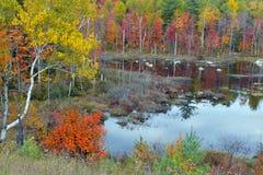 Colores del otoño - la caída se va en el Adirondacks, Nueva York foto de archivo