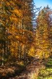 Colores del otoño un parque por completo de los colores del otoño, un viaje de la montaña entre los árboles coloridos hermosos en imágenes de archivo libres de regalías