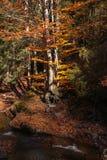 Colores del otoño un parque por completo de los colores del otoño, un viaje de la montaña entre los árboles coloridos hermosos en fotografía de archivo