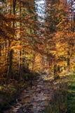 Colores del otoño un parque por completo de los colores del otoño, un viaje de la montaña entre los árboles coloridos hermosos en imagenes de archivo