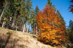 Colores del otoño un parque por completo de los colores del otoño, un viaje de la montaña entre los árboles coloridos hermosos en foto de archivo libre de regalías