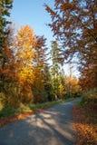 Colores del otoño un parque por completo de los colores del otoño, un viaje de la montaña entre los árboles coloridos hermosos en imagen de archivo libre de regalías