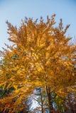 Colores del otoño un parque por completo de los colores del otoño, un viaje de la montaña entre los árboles coloridos hermosos en foto de archivo
