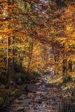 Colores del otoño un parque por completo de los colores del otoño, un viaje de la montaña entre los árboles coloridos hermosos en imagen de archivo