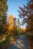 Colores del otoño un parque por completo de los colores del otoño, un viaje de la montaña entre los árboles coloridos hermosos en fotos de archivo libres de regalías