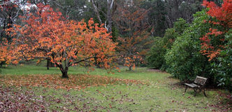 Colores del otoño y banco de parque Foto de archivo libre de regalías