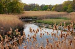Colores del pantano Fotos de archivo