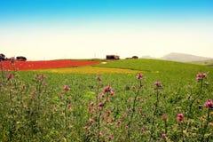 Colores del resorte, campos de flores salvajes del país, Italia Foto de archivo libre de regalías