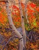 Colores del toldo de la caída Foto de archivo libre de regalías