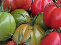 Colores del tomate Fotografía de archivo libre de regalías