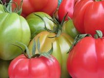 Colores del tomate Imagenes de archivo