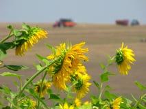 Colores del verano Fotografía de archivo libre de regalías