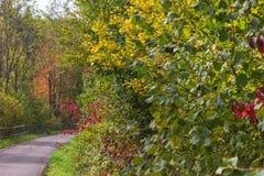 Colores del verano de Autumn September Indian de hojas y de árboles en un b Imagen de archivo