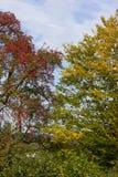 Colores del verano de Autumn September Indian de hojas y de árboles en un b Imagen de archivo libre de regalías