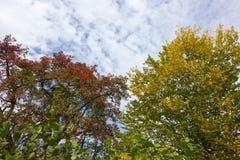 Colores del verano de Autumn September Indian de hojas y de árboles en un b Imágenes de archivo libres de regalías