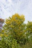 Colores del verano de Autumn September Indian de hojas y de árboles en un b Fotografía de archivo libre de regalías