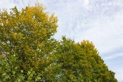 Colores del verano de Autumn September Indian de hojas y de árboles en un b Foto de archivo