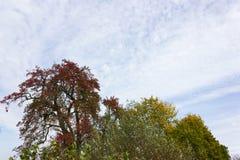 Colores del verano de Autumn September Indian de hojas y de árboles en un b Foto de archivo libre de regalías