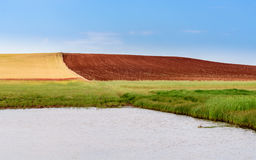 Colores del verano en el campo Imagen de archivo libre de regalías