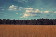 Colores del vintage del bosque del paisaje Fotografía de archivo libre de regalías