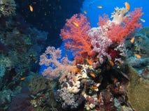 Colores en colores pastel en Gota Kebir, los filones de St John, Mar Rojo, Egipto fotos de archivo