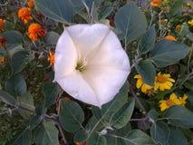"""Colores enormes blancos del ½ Ð¸Ñ del ½ Ð del  Ð?Ð del ¾ Ñ de е Ð del ½ del ¾ Ð del """"Ð de а Ñ del ½ del tabaco Ð… ² DEL ¾ Ð DE foto de archivo"""