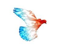 Colores franceses de la bandera en la silueta de la paloma Imagen de archivo libre de regalías