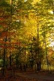 Colores hermosos de la caída Imágenes de archivo libres de regalías