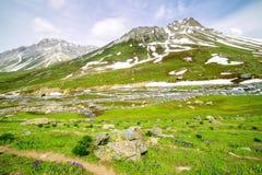 Colores hermosos de la primavera Fotos de archivo