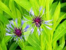 Colores hermosos de la vista deliciosa de la naturaleza Fotos de archivo libres de regalías