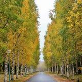 Colores hermosos del otoño en el cementerio fotografía de archivo