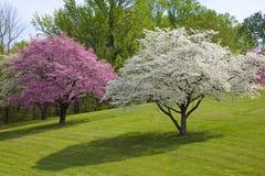 Colores hermosos del resorte Foto de archivo libre de regalías