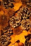 Colores imponentes del otoño o de la caída. Foto de archivo libre de regalías