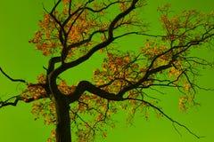 Colores increíbles del otoño Fotografía de archivo