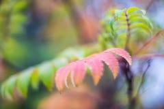 Colores irreales del otoño Foto de archivo