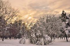 Colores mágicos de la tarde del invierno Imágenes de archivo libres de regalías