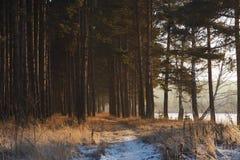 Colores mágicos del bosque del invierno de la tarde Fotos de archivo