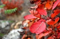 Colores magníficos Fotografía de archivo libre de regalías