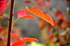 Colores magníficos Fotos de archivo libres de regalías