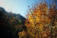 Colores magníficos Fotografía de archivo
