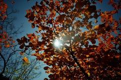 Colores magníficos Foto de archivo libre de regalías