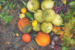 Colores mezclados hermosos de las calabazas maduras que mienten en la hierba en el diagrama agrícola al día de acción de gracias Foto de archivo libre de regalías