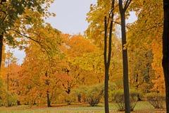 Colores olorful del ¡de Ð del otoño Imagen de archivo libre de regalías
