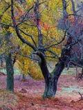 Colores otoñales Imagen de archivo libre de regalías