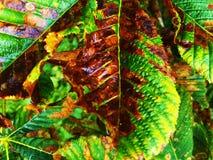 Colores otoñales Imagenes de archivo